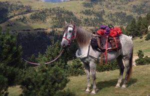 Cavall carregat amb alforges. Reportatge vacances sostenibles.