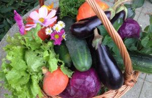 Cooperativas de consumo. Cesto de verduras.